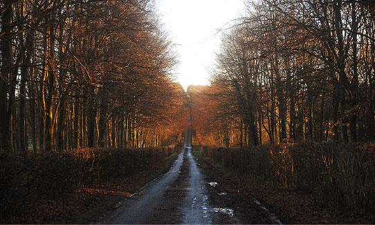 Chilgrove woodland
