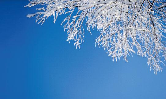 Chilgrove Winter scene