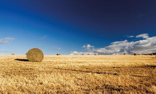 Rural Sussex wheat field